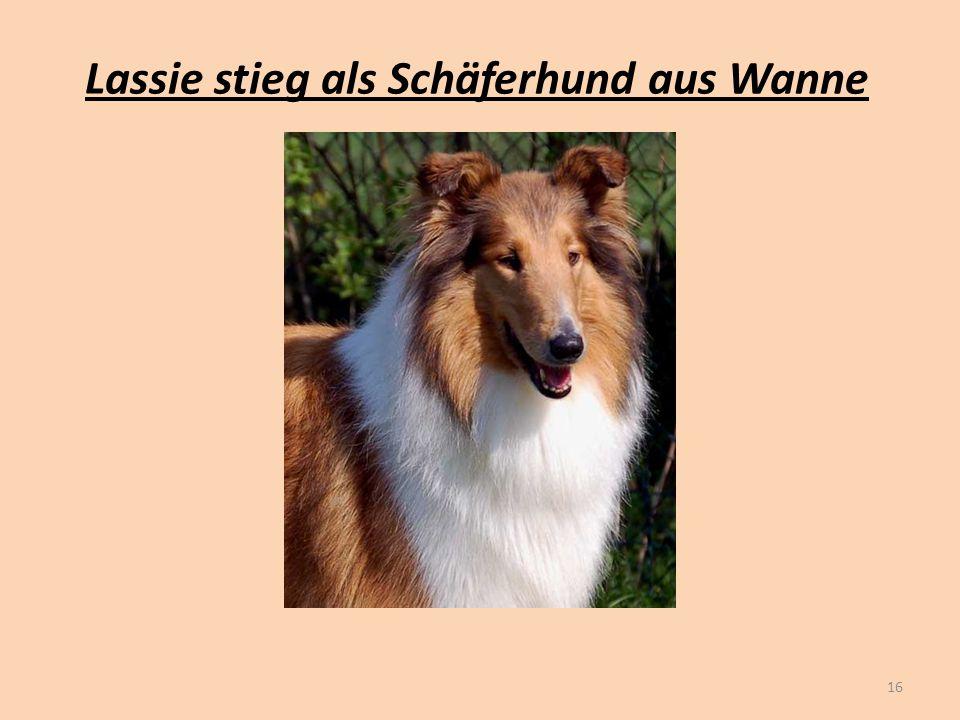 Lassie stieg als Schäferhund aus Wanne