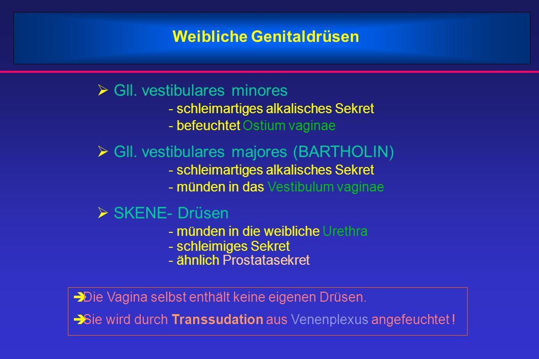 Weibliche Genitaldrüsen