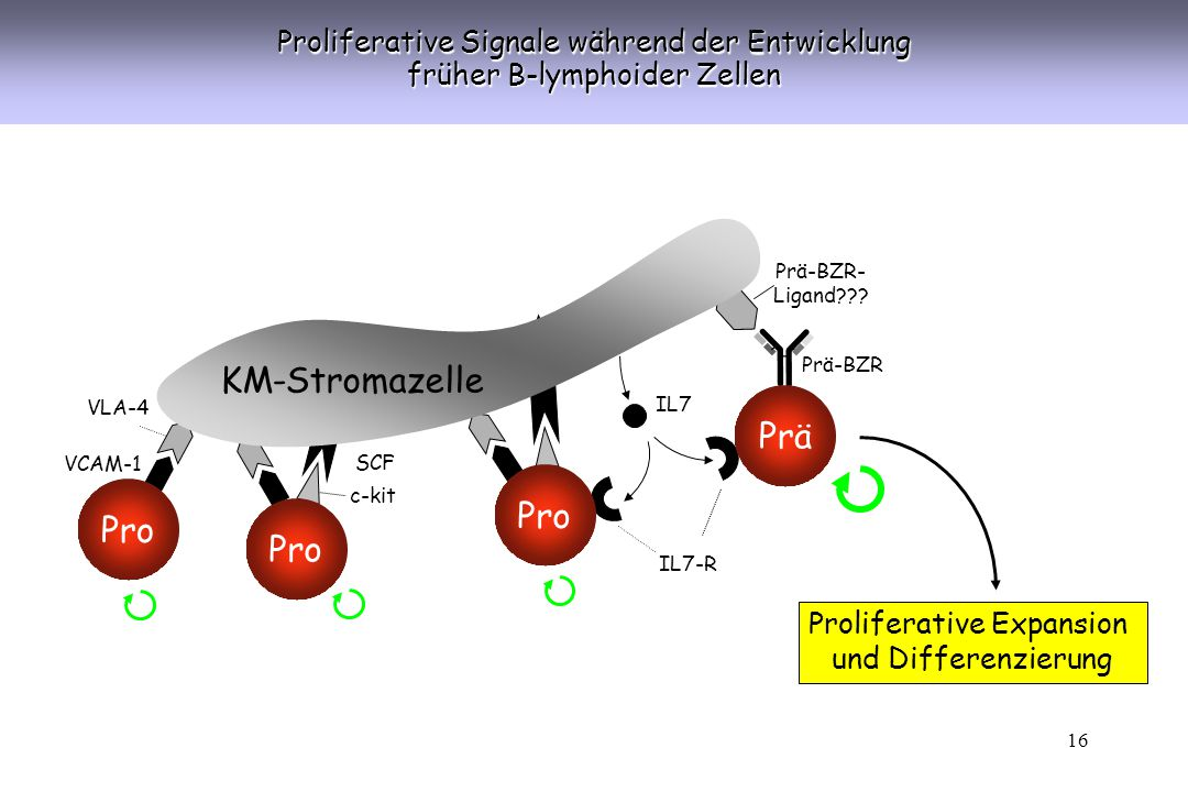KM-Stromazelle Prä Pro Pro Pro