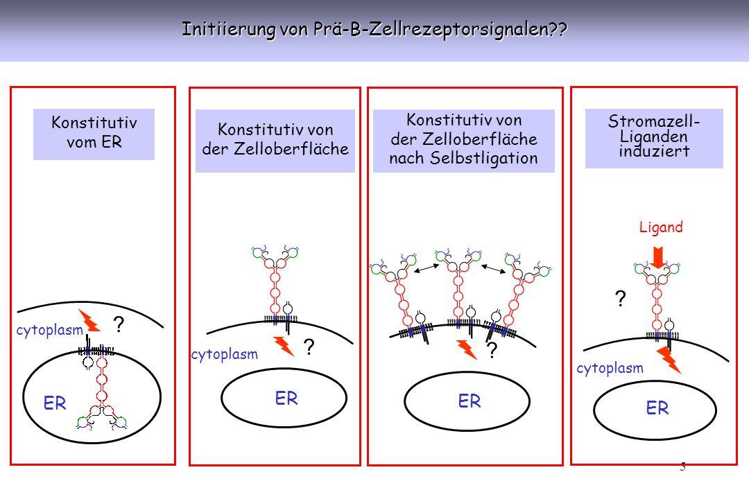 Initiierung von Prä-B-Zellrezeptorsignalen ER ER ER ER