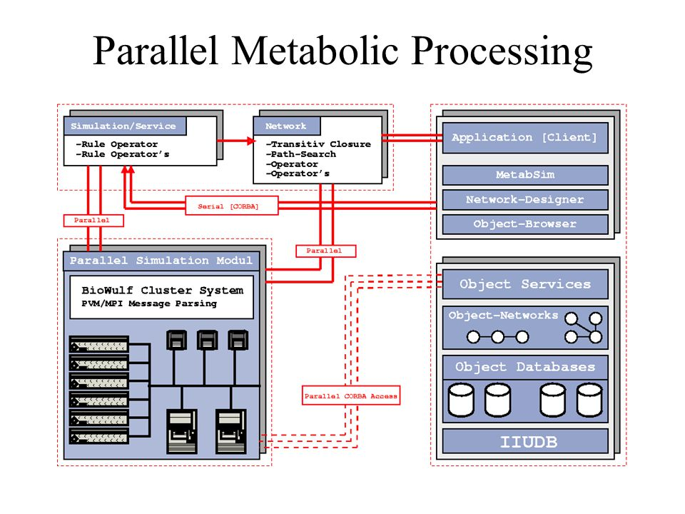 Parallel Metabolic Processing
