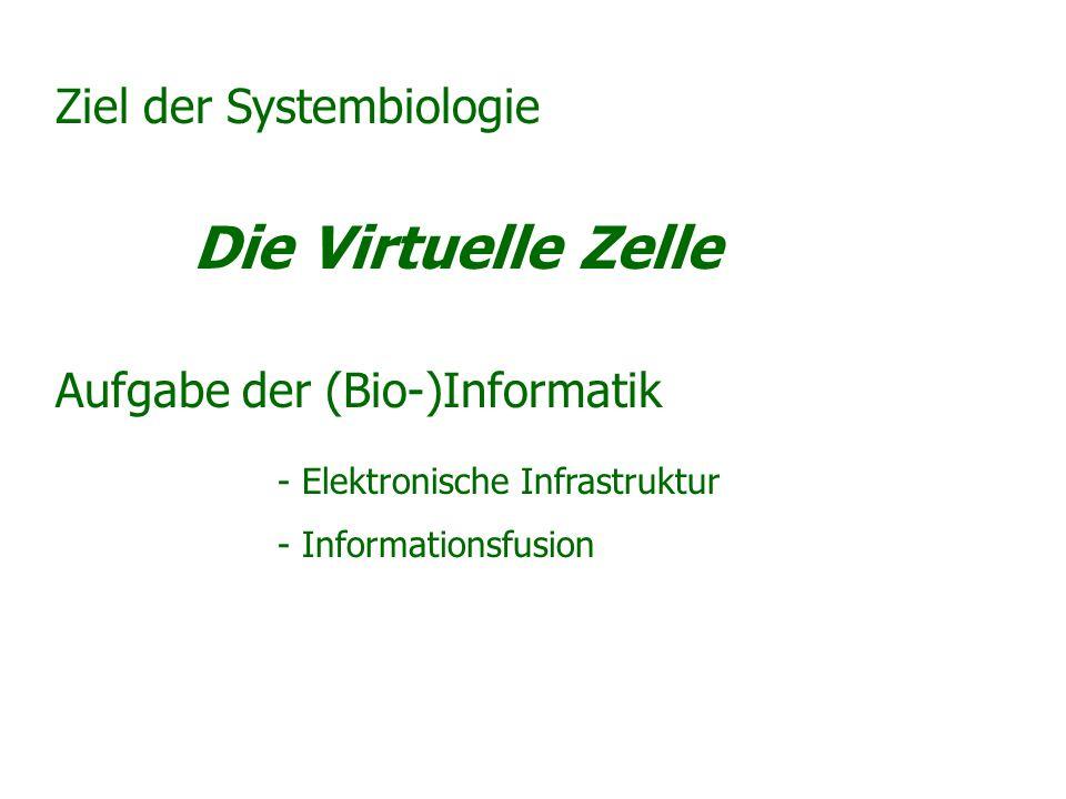 Die Virtuelle Zelle Ziel der Systembiologie