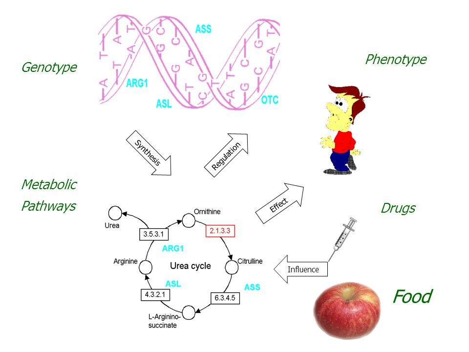Food Phenotype Genotype Metabolic Pathways Drugs Synthesis Regulation