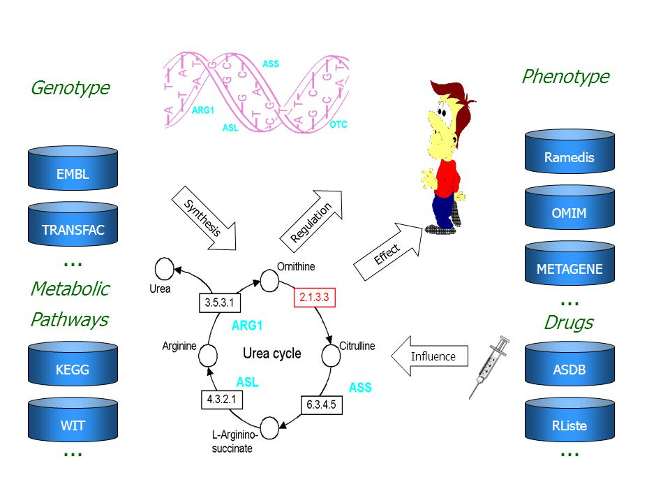 Phenotype Genotype Metabolic Pathways Drugs Ramedis