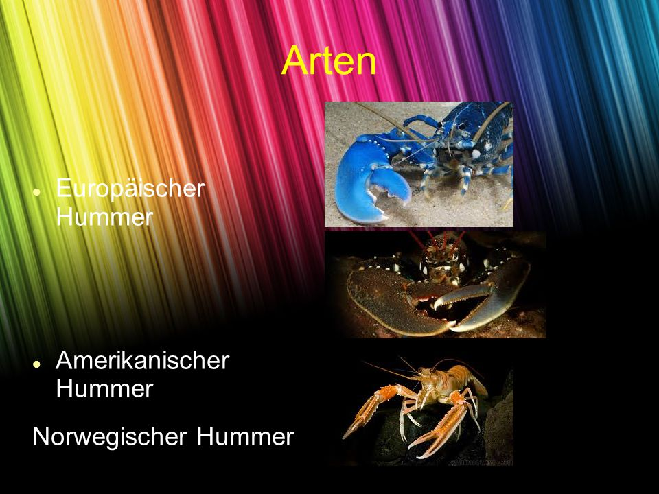 Arten Europäischer Hummer Amerikanischer Hummer Norwegischer Hummer