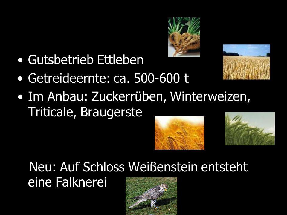 Gutsbetrieb Ettleben Getreideernte: ca. 500-600 t. Im Anbau: Zuckerrüben, Winterweizen, Triticale, Braugerste.