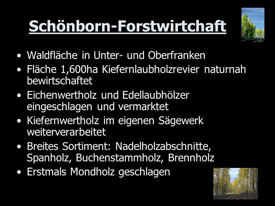 Schönborn-Forstwirtchaft