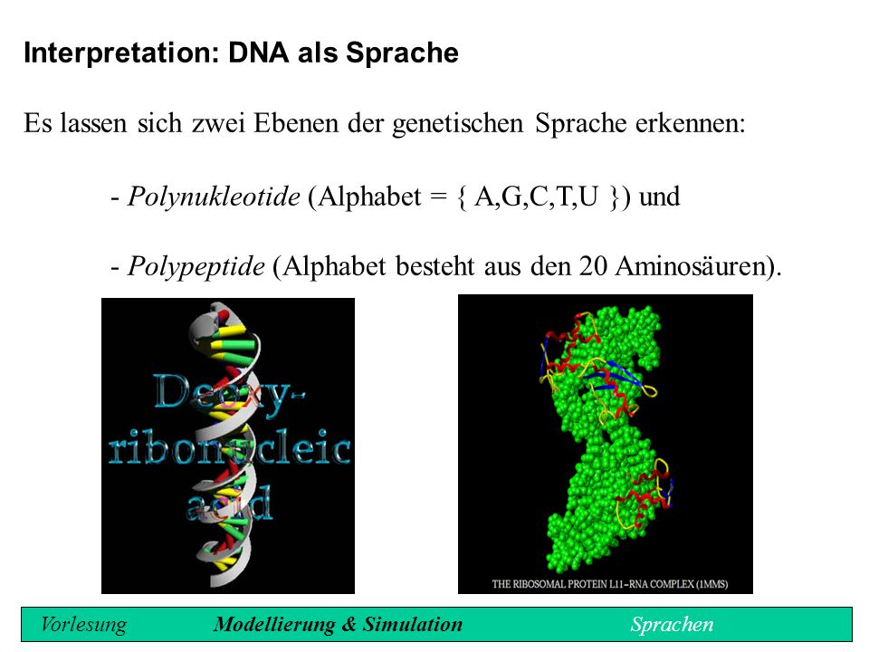 Interpretation: DNA als Sprache
