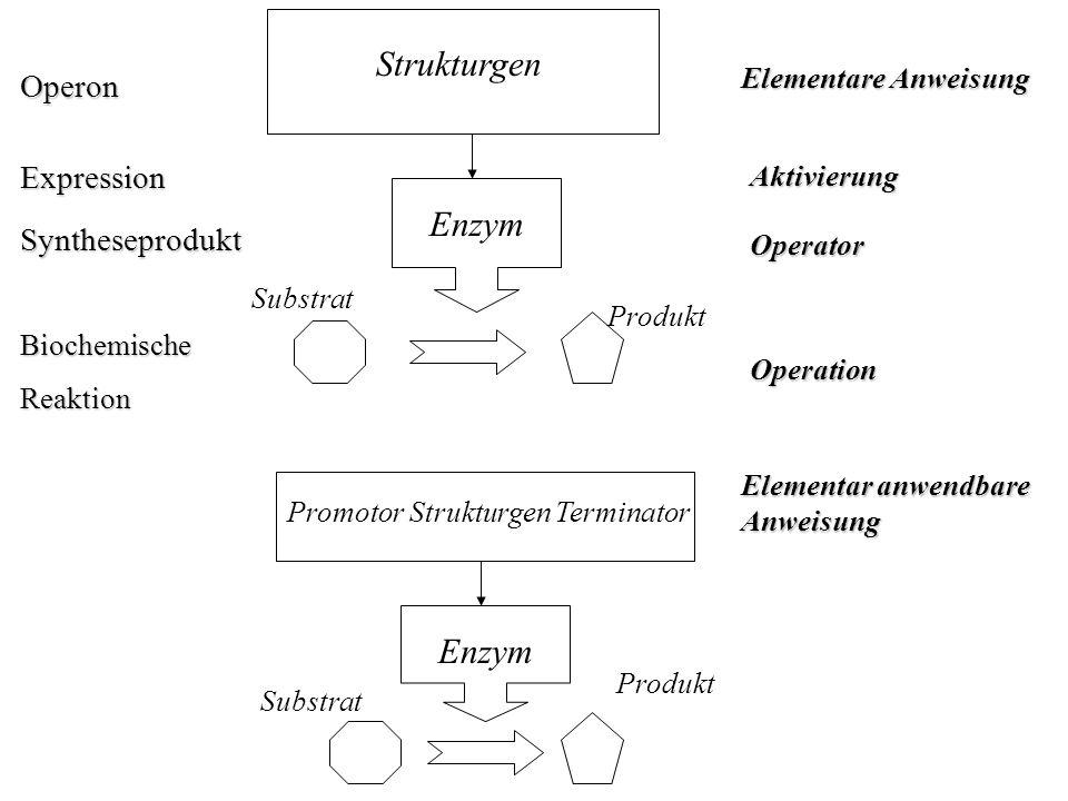 Strukturgen Enzym Enzym Operon Expression Syntheseprodukt