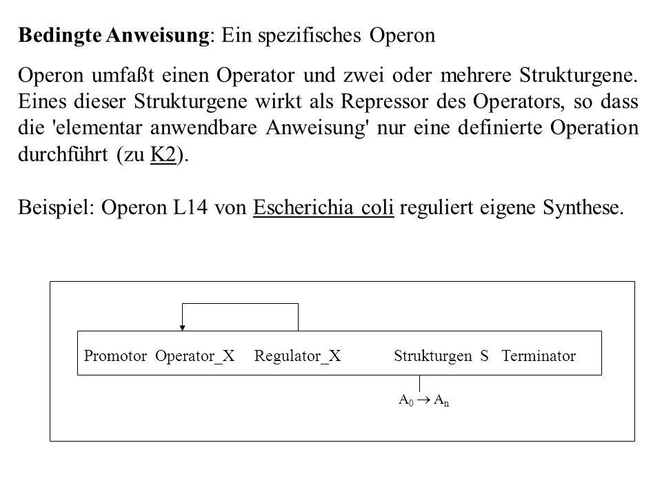 Bedingte Anweisung: Ein spezifisches Operon