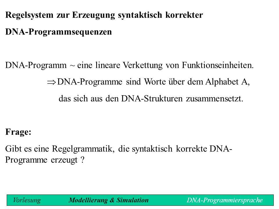 Regelsystem zur Erzeugung syntaktisch korrekter DNA-Programmsequenzen