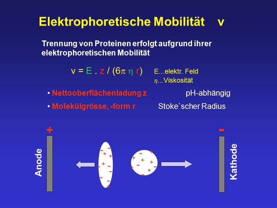 Elektrophoretische Mobilität v