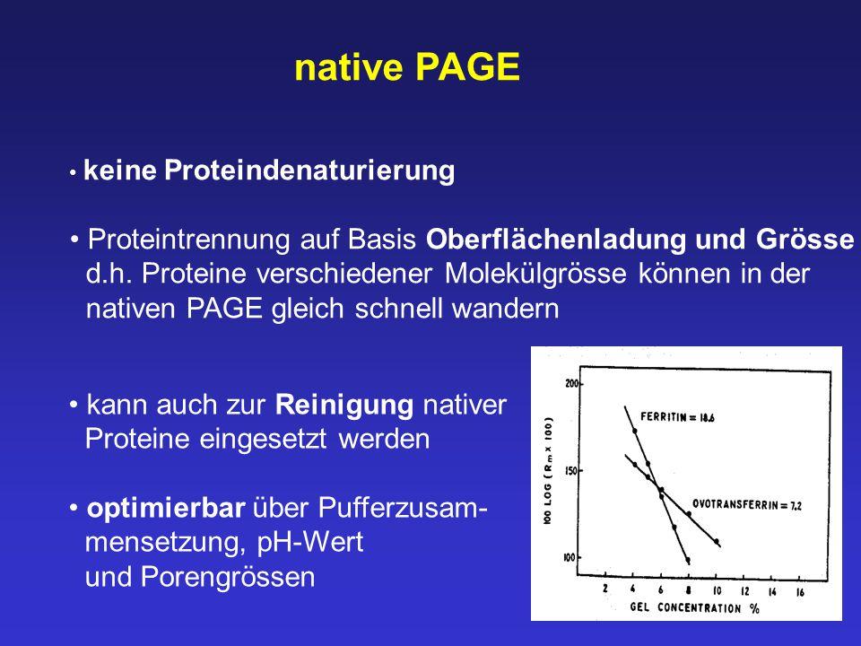 native PAGE Proteintrennung auf Basis Oberflächenladung und Grösse