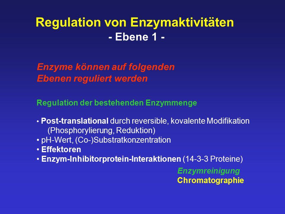 Regulation von Enzymaktivitäten