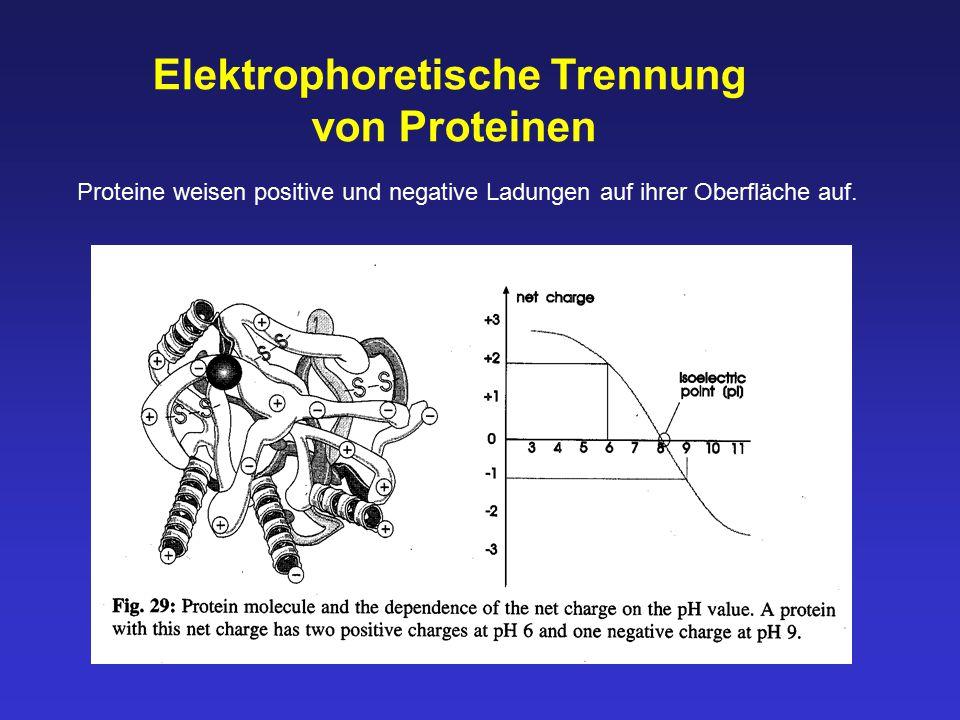 Elektrophoretische Trennung