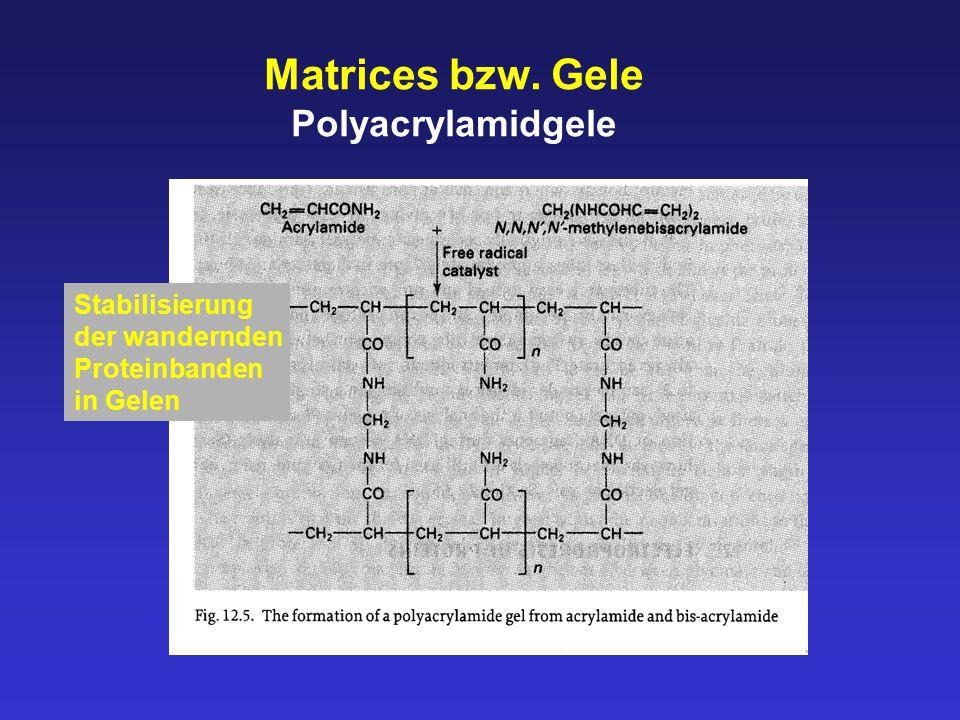 Matrices bzw. Gele Polyacrylamidgele Stabilisierung der wandernden