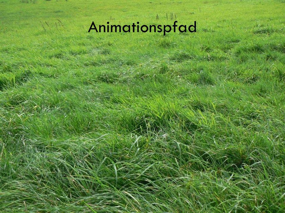 Animationspfad Objekte animieren