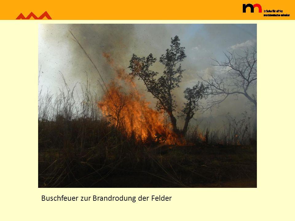 Buschfeuer zur Brandrodung der Felder