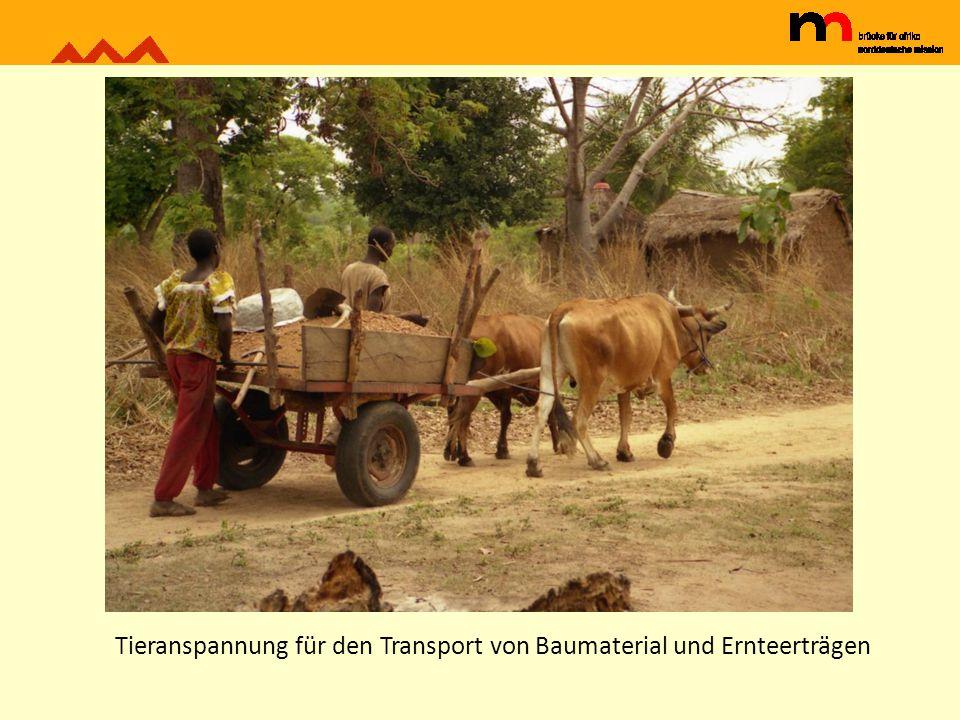 Tieranspannung für den Transport von Baumaterial und Ernteerträgen