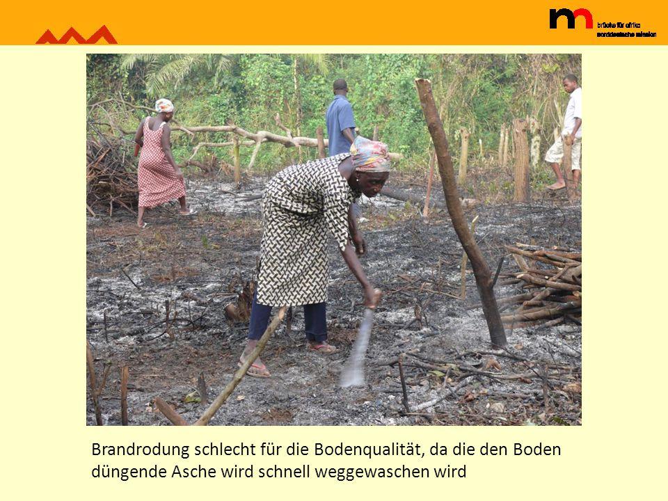 Brandrodung schlecht für die Bodenqualität, da die den Boden düngende Asche wird schnell weggewaschen wird