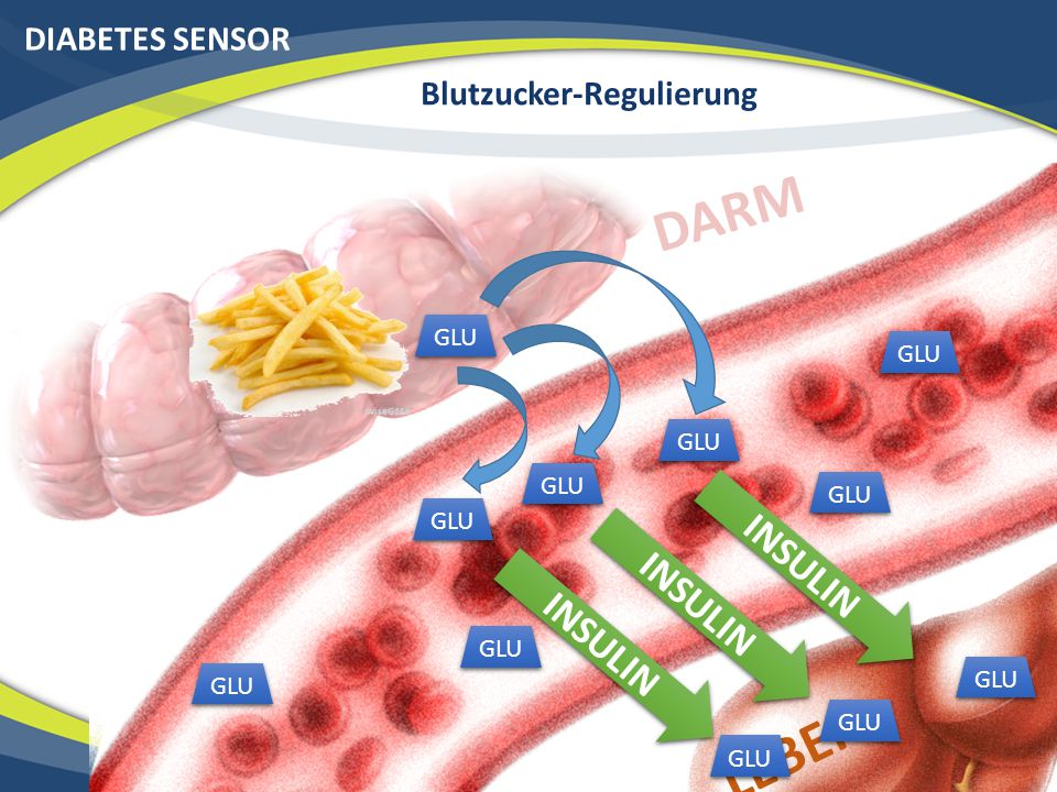 Blutzucker-Regulierung