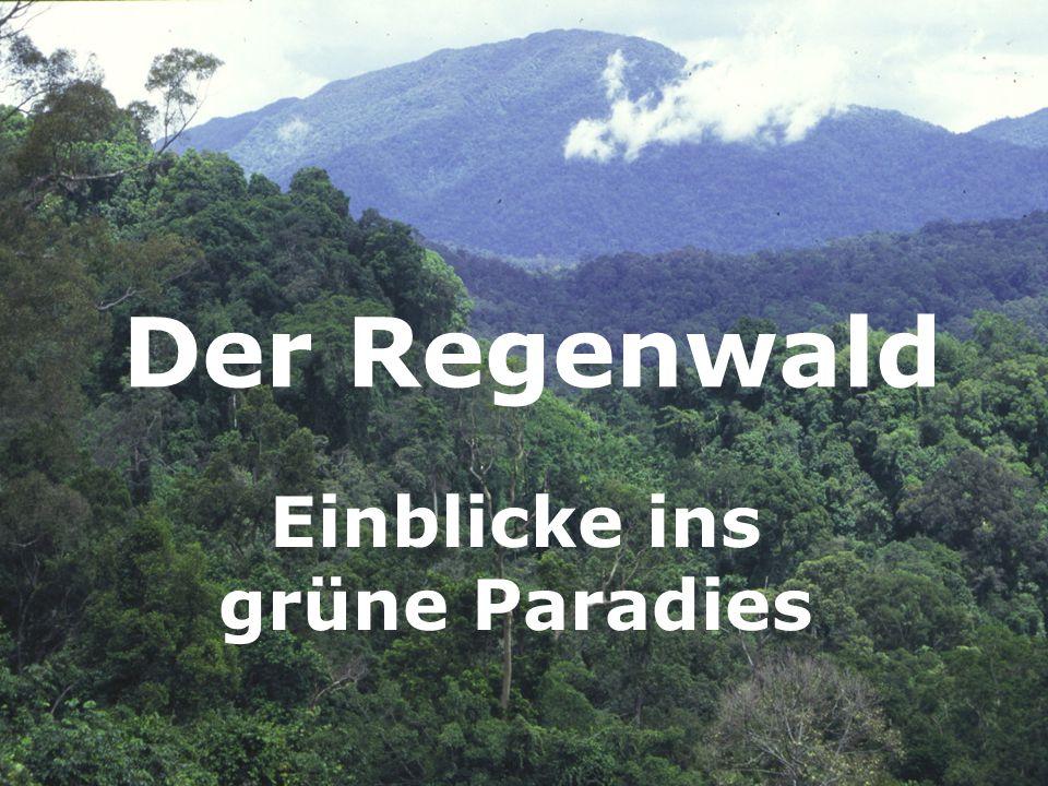 Einblicke ins grüne Paradies