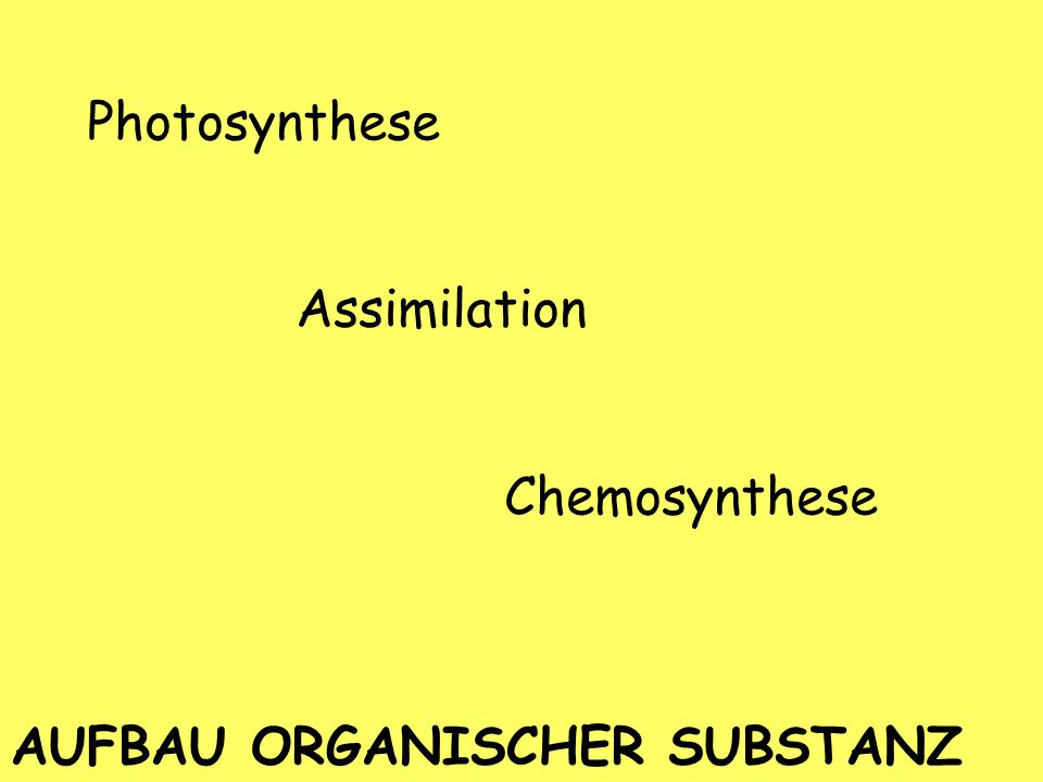 Photosynthese Assimilation Chemosynthese AUFBAU ORGANISCHER SUBSTANZ