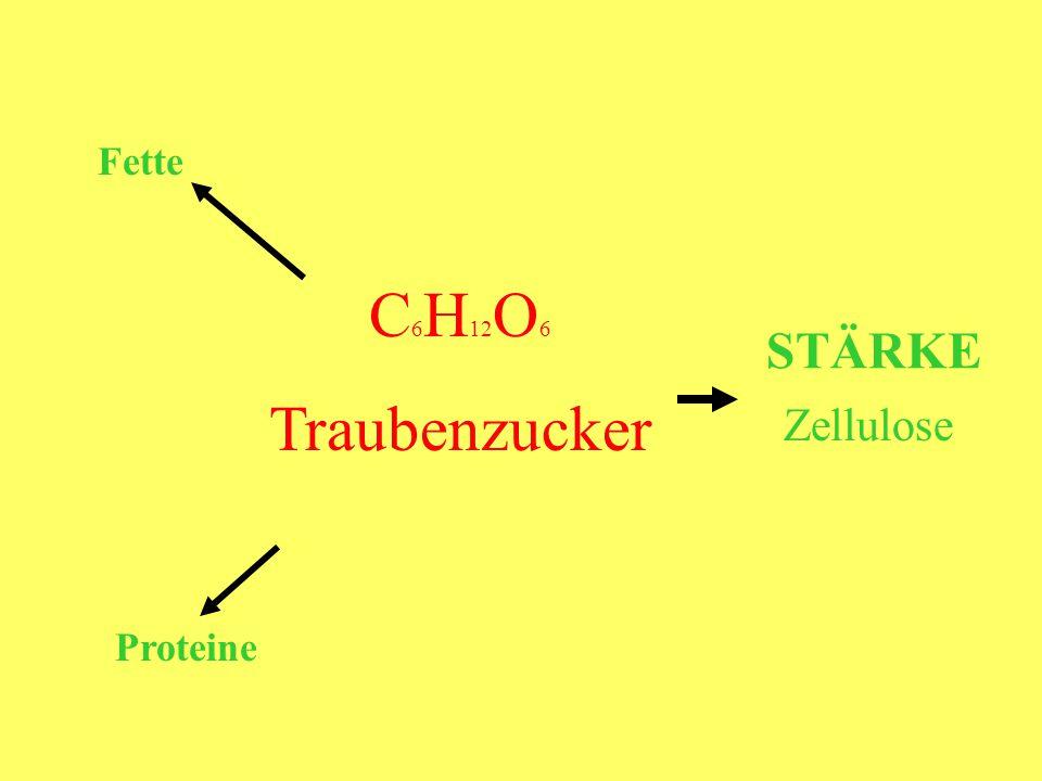 Fette C6H12O6 Traubenzucker STÄRKE Zellulose Proteine