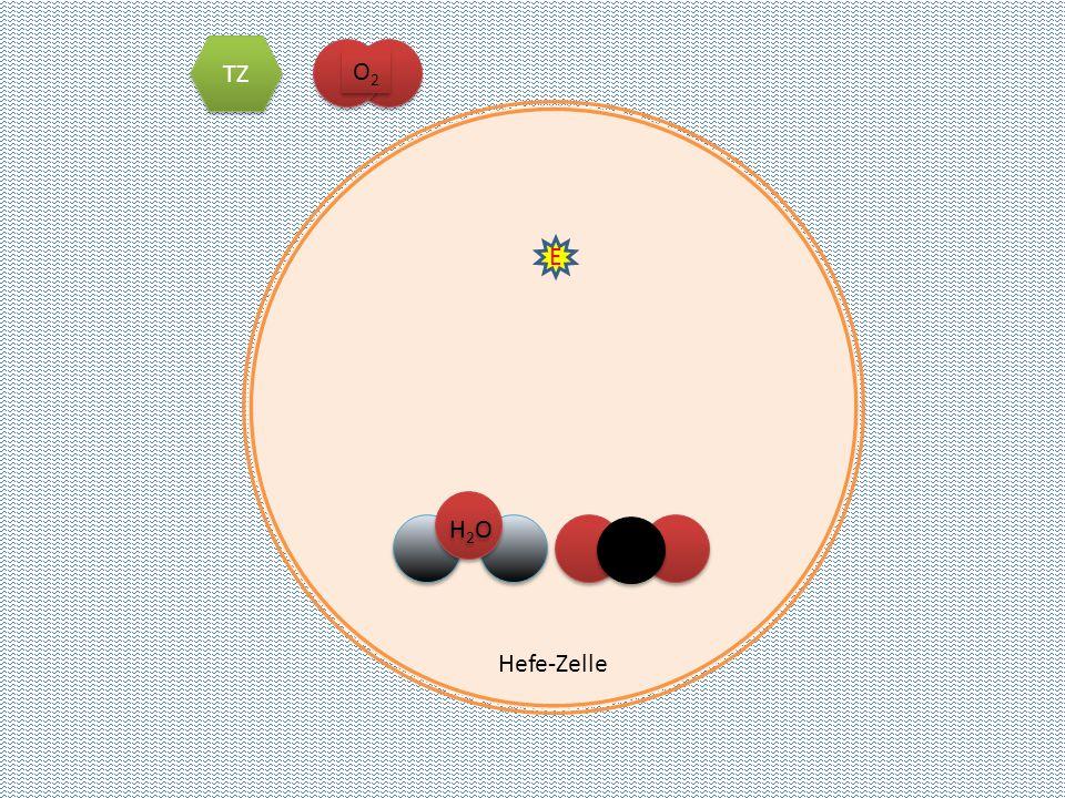 TZ O2 Hefe-Zelle E CO2 H2O
