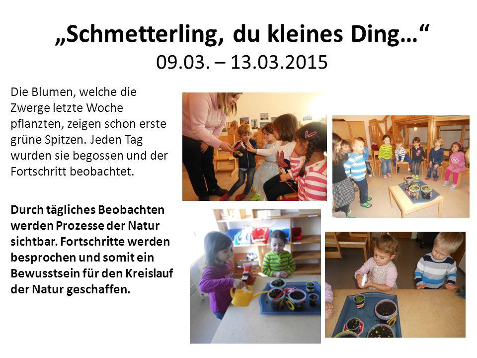 """""""Schmetterling, du kleines Ding… 09.03. – 13.03.2015"""