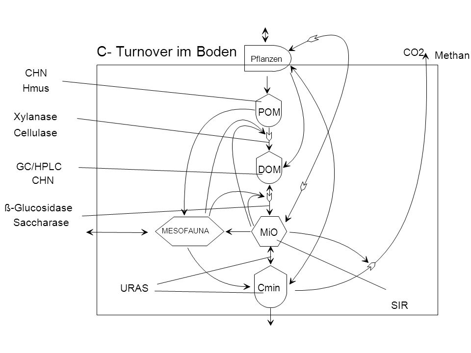 C- Turnover im Boden CO2 Methan CHN Hmus Xylanase Cellulase GC/HPLC