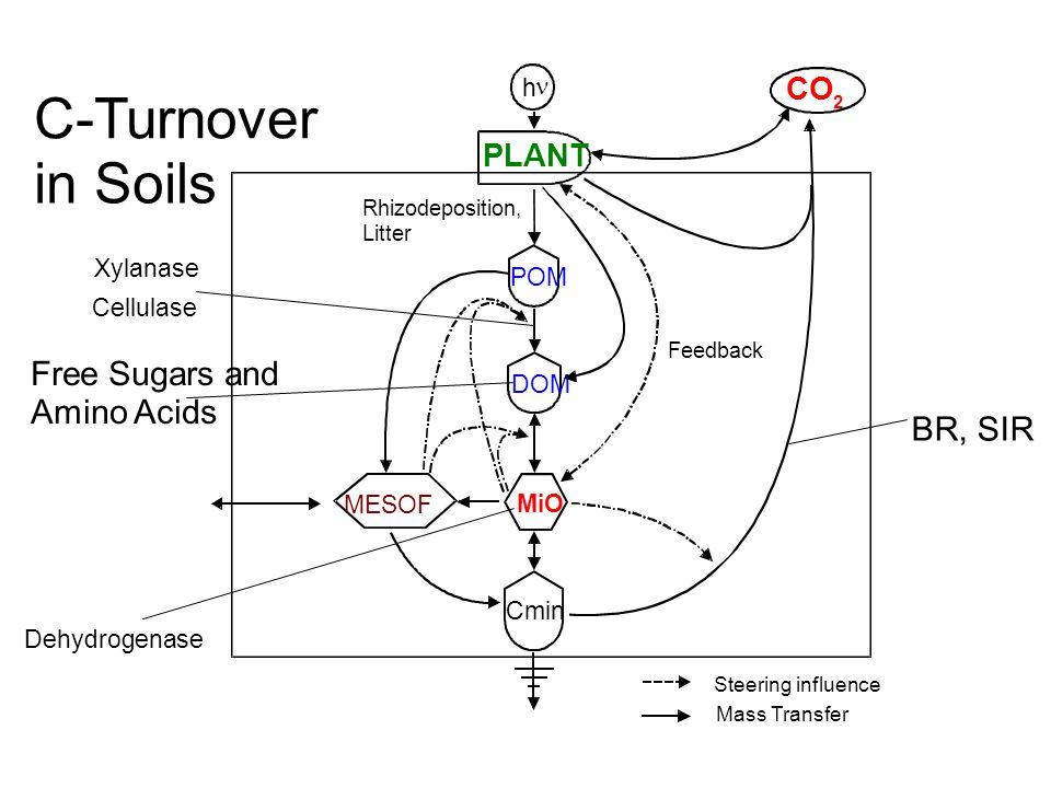 C-Turnover in Soils Free Sugars and Amino Acids BR, SIR CO PLANT DOM