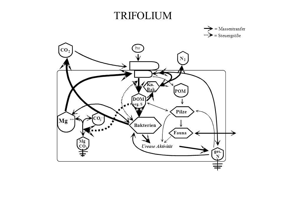 TRIFOLIUM Mg CO Pilze Bakterien = Massentranfer = Steuergröße DOM