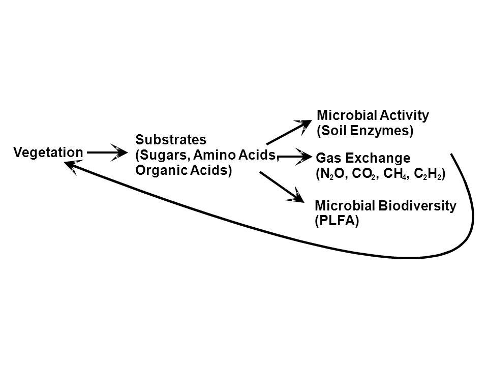 Microbial Biodiversity (PLFA)