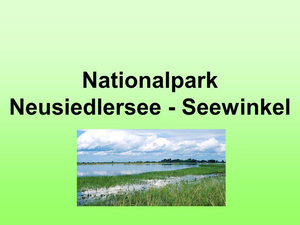 Nationalpark Neusiedlersee - Seewinkel