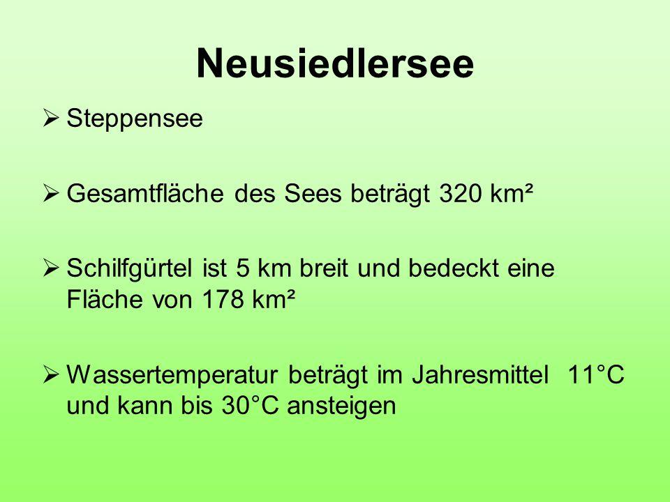 Neusiedlersee Steppensee Gesamtfläche des Sees beträgt 320 km²