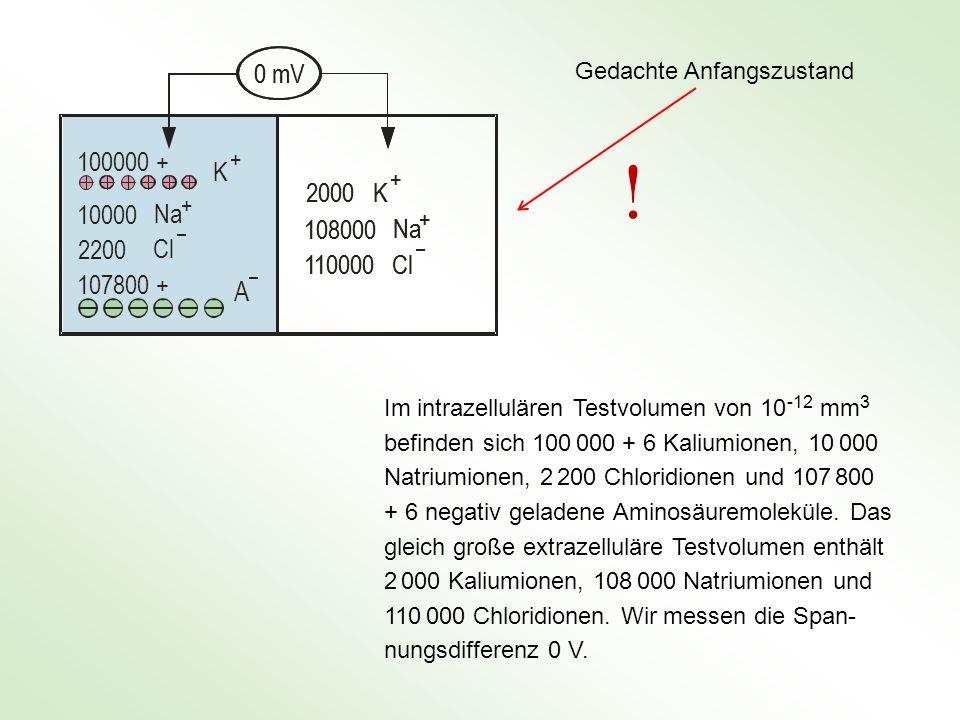 0 mV 100000 + 10000. 2200. 107800 + K. Na. Cl. A. + 2000. 108000. 110000. Gedachte Anfangszustand.