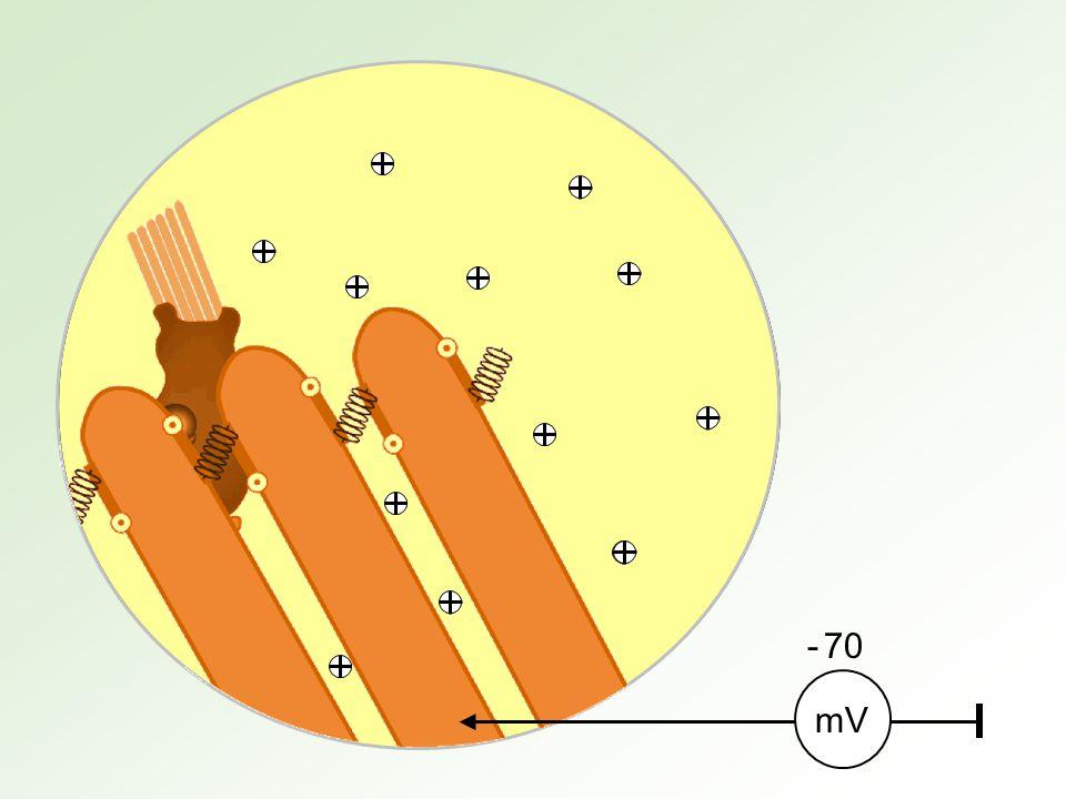 - 70 mV