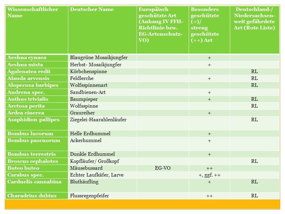 Deutschland-/ Niedersachsen-weit gefährdete Art (Rote Liste)
