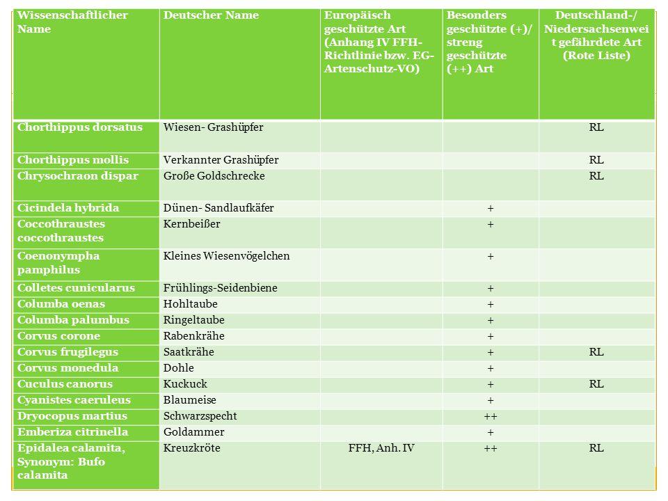 Deutschland-/ Niedersachsenweit gefährdete Art (Rote Liste)