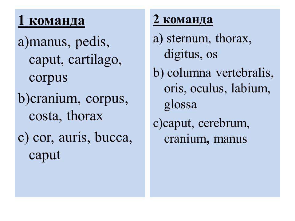 1 команда a)manus, pedis, caput, cartilago, corpus b)cranium, corpus, costa, thorax c) cor, auris, bucca, caput