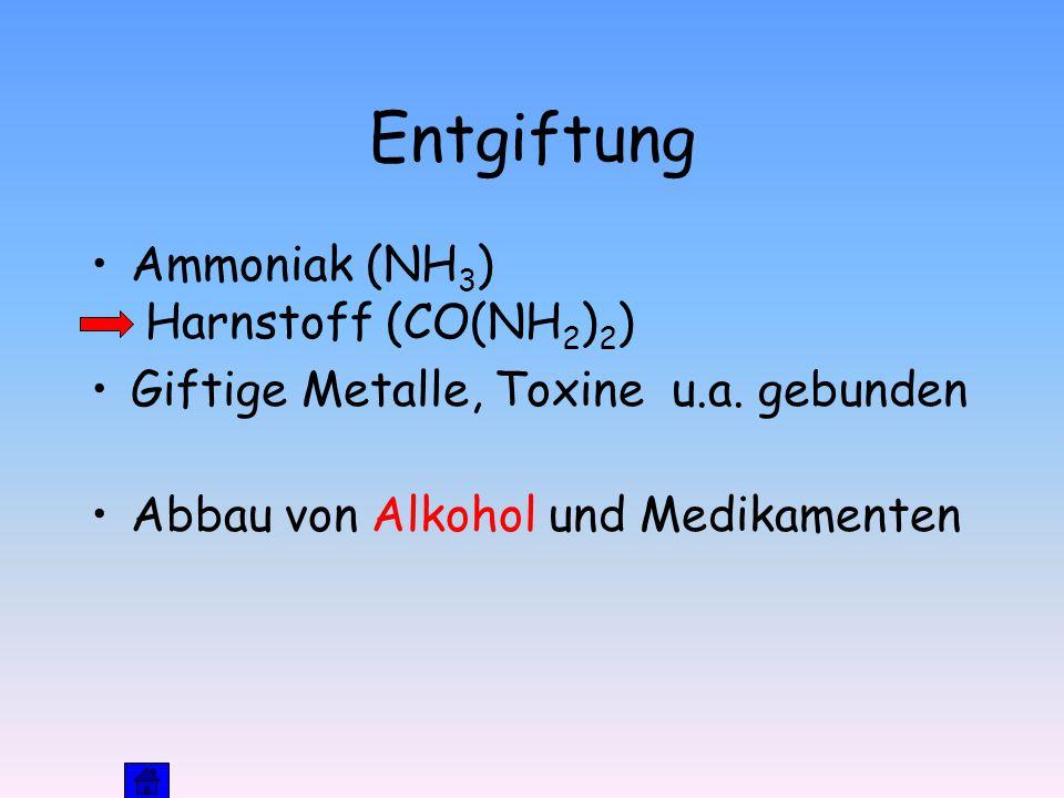 Entgiftung Ammoniak (NH3) Harnstoff (CO(NH2)2)