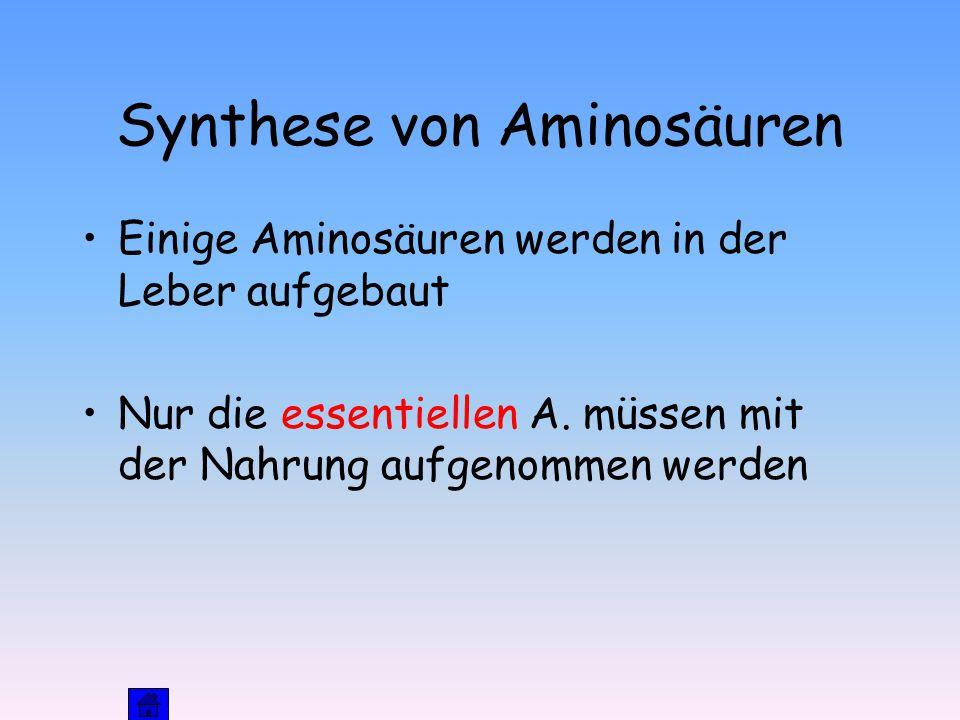 Synthese von Aminosäuren