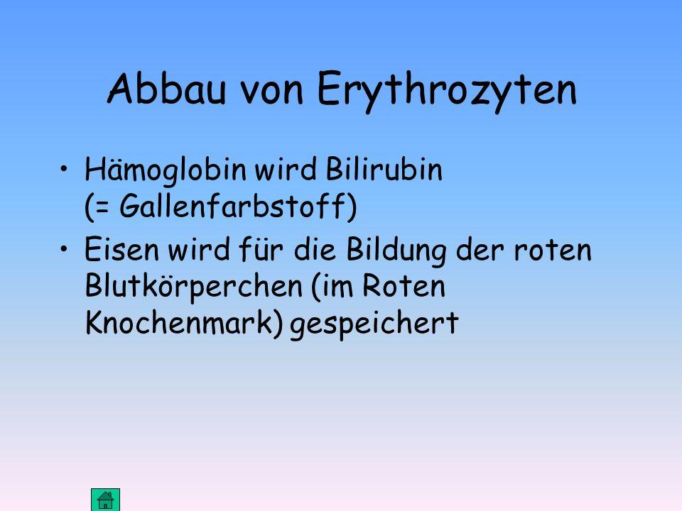 Abbau von Erythrozyten