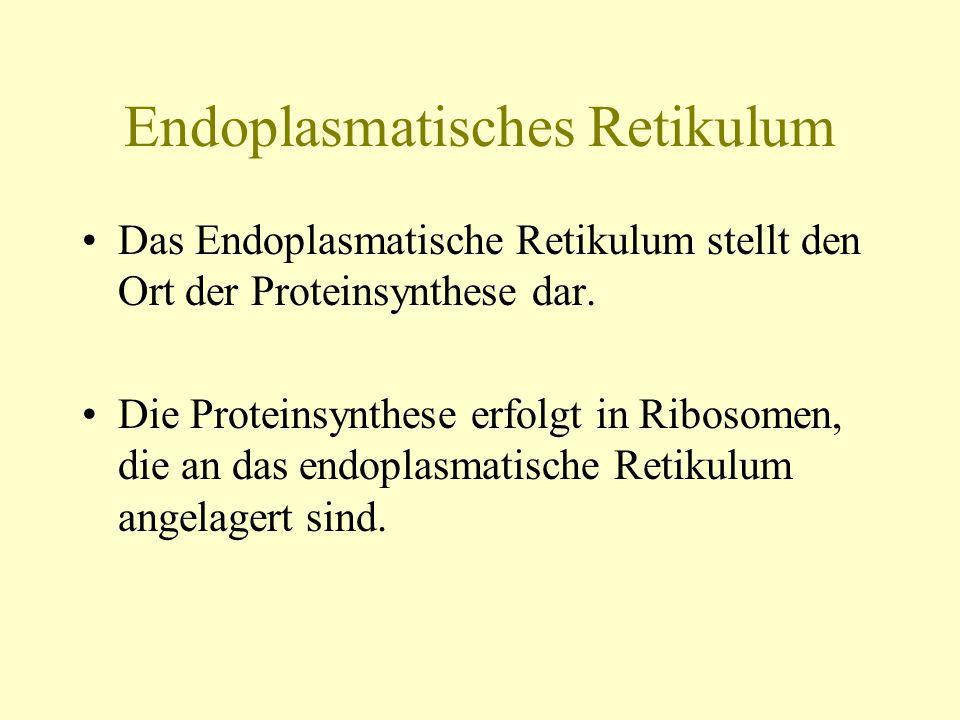 Endoplasmatisches Retikulum