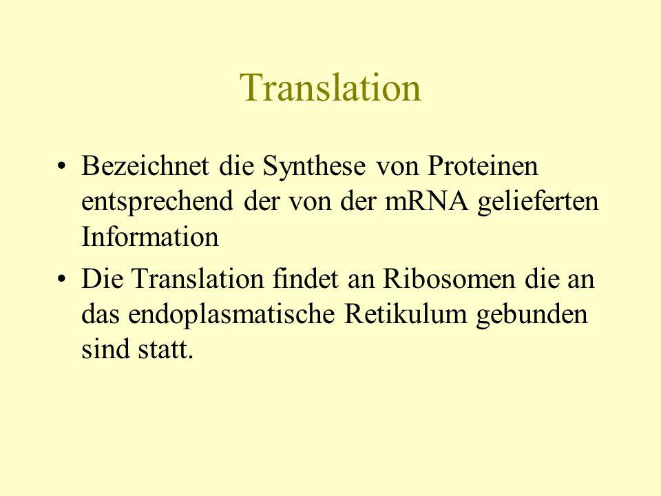 Translation Bezeichnet die Synthese von Proteinen entsprechend der von der mRNA gelieferten Information.