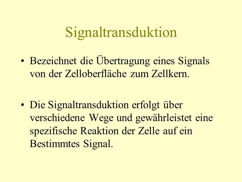 Signaltransduktion Bezeichnet die Übertragung eines Signals von der Zelloberfläche zum Zellkern.
