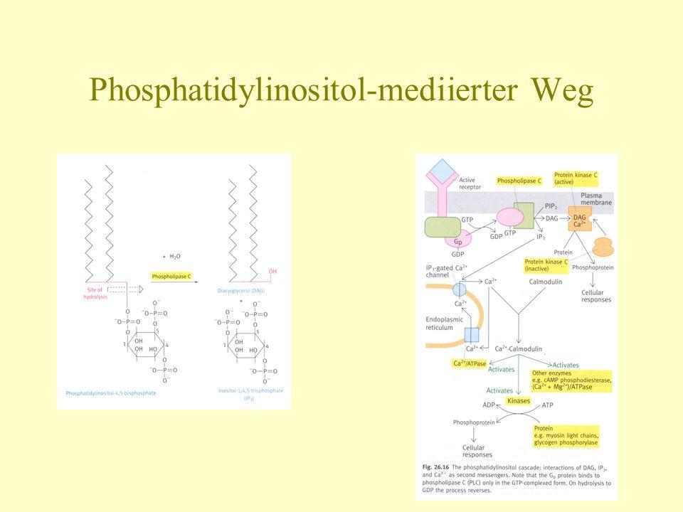 Phosphatidylinositol-mediierter Weg