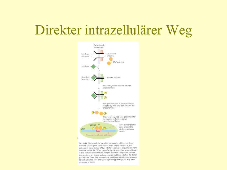 Direkter intrazellulärer Weg