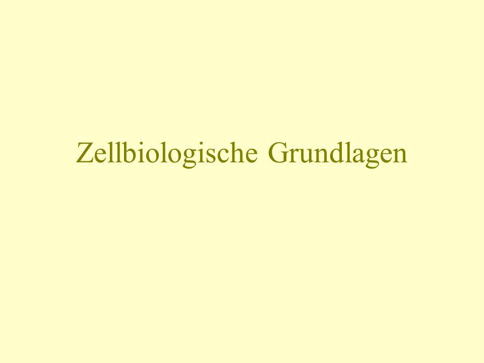 Zellbiologische Grundlagen